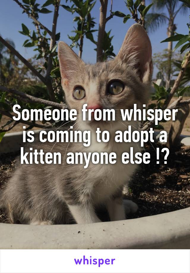 Someone from whisper is coming to adopt a kitten anyone else !?