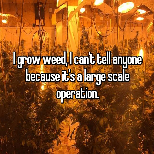 I grow weed, I can't tell anyone because it's a large scale operation.