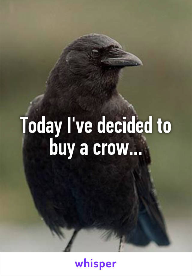 Today I've decided to buy a crow...