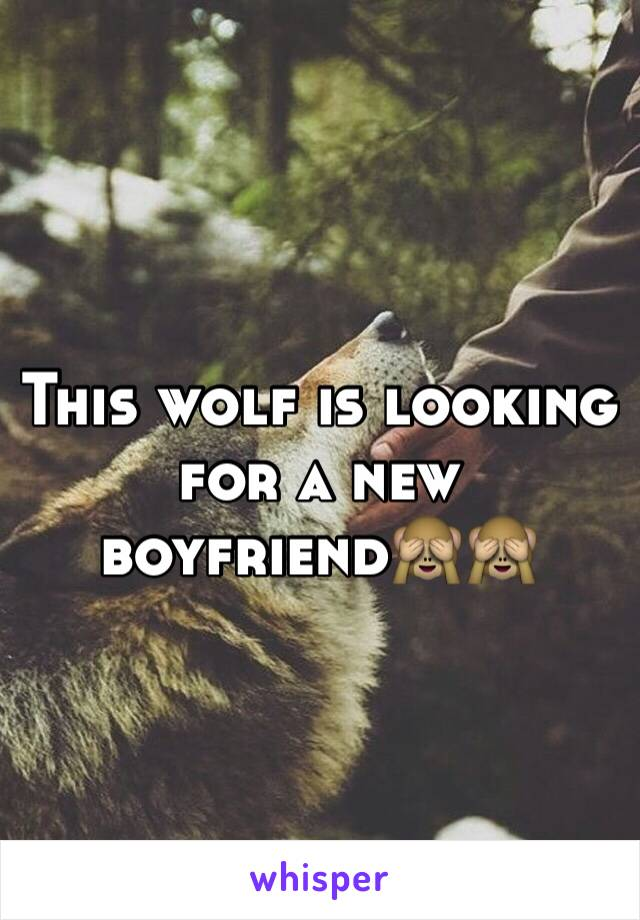 This wolf is looking for a new boyfriend🙈🙈