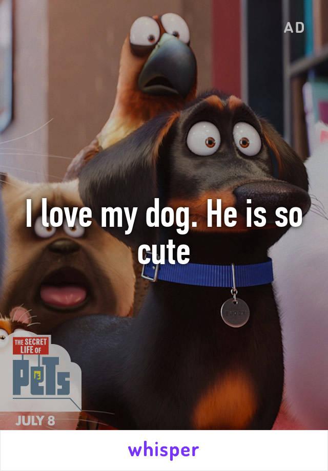 I love my dog. He is so cute