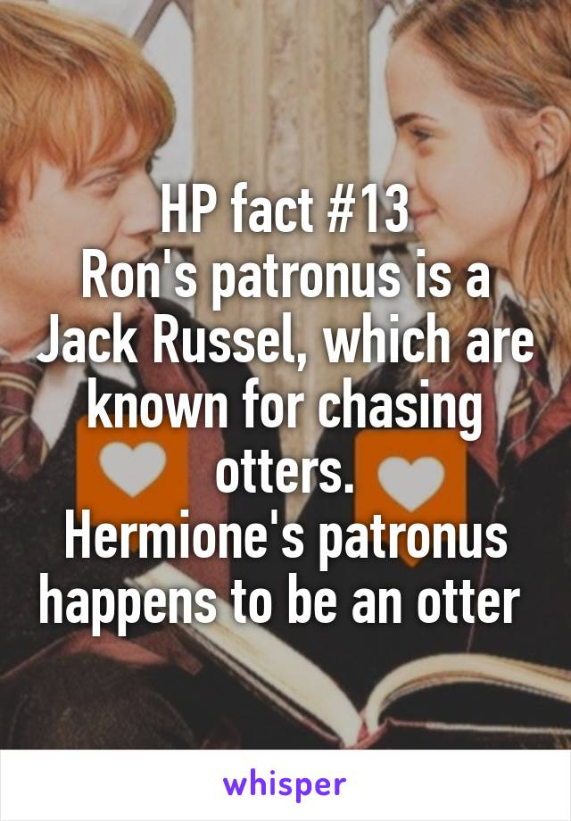 HP fact #13 Ron's patronus is a Jack Russel, which are known for chasing otters. Hermione's patronus happens to be an otter