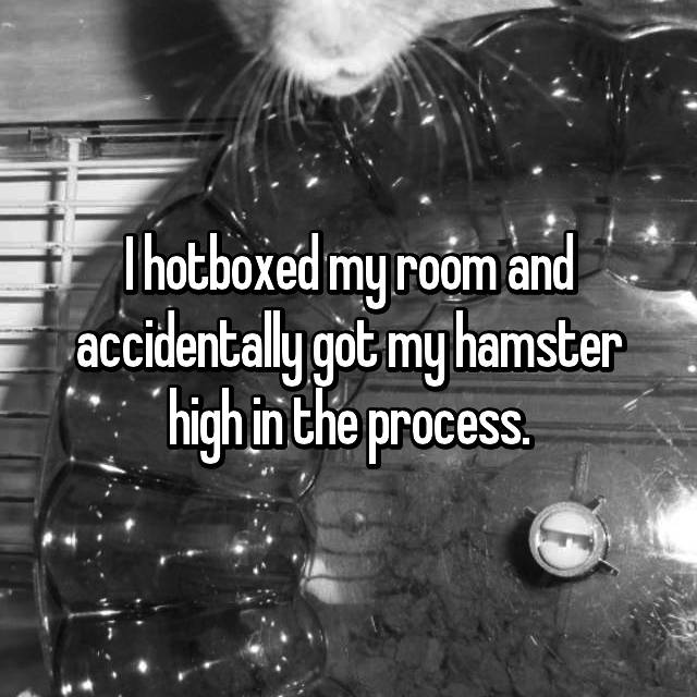 I hotboxed my room and accidentally got my hamster high in the process.