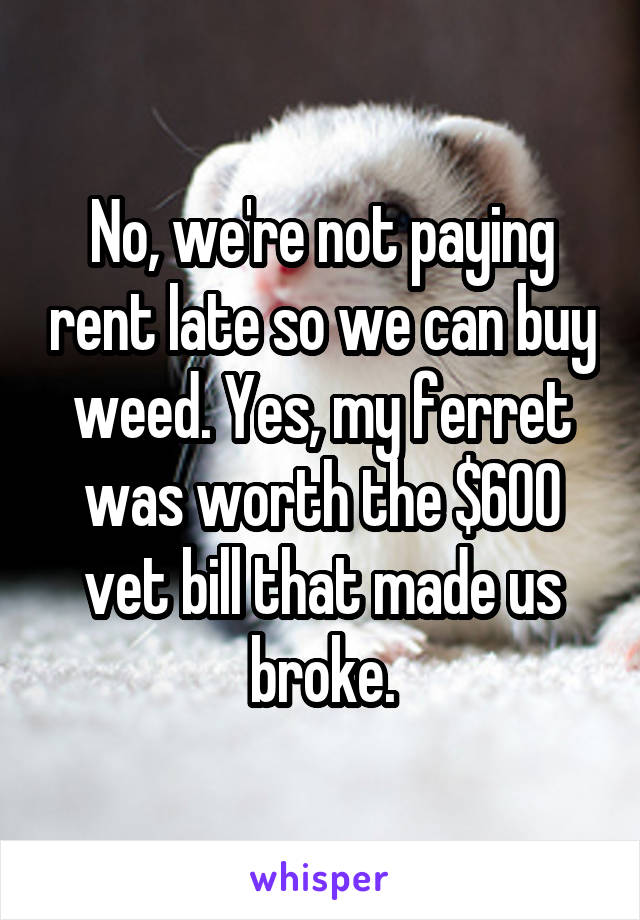 No, we're not paying rent late so we can buy weed. Yes, my ferret was worth the $600 vet bill that made us broke.