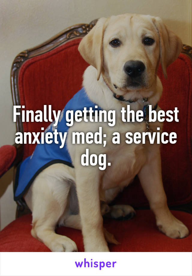 Finally getting the best anxiety med; a service dog.