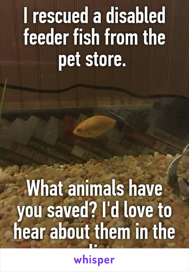 I rescued a disabled feeder fish from the pet store.       What animals have you saved? I'd love to hear about them in the replies.