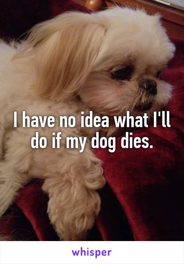 I have no idea what I'll do if my dog dies.