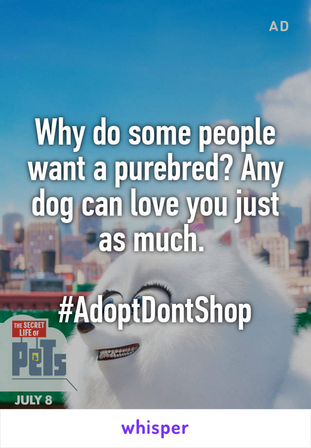 Why do some people want a purebred? Any dog can love you just as much.   #AdoptDontShop