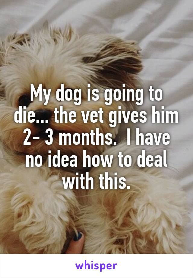 My dog is going to die... the vet gives him 2- 3 months.  I have no idea how to deal with this.