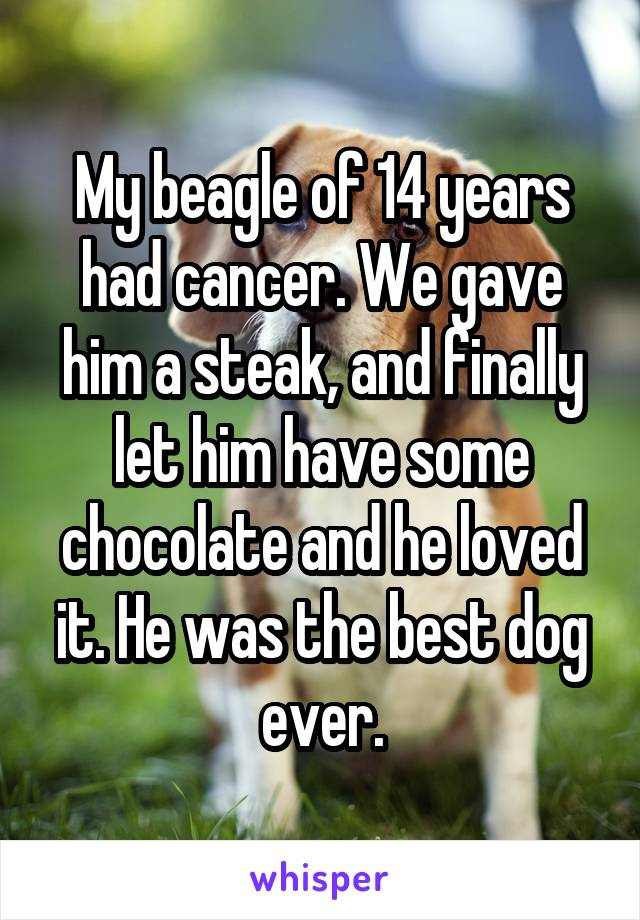 My beagle of 14 years had cancer. We gave him a steak, and finally let him have some chocolate and he loved it. He was the best dog ever.