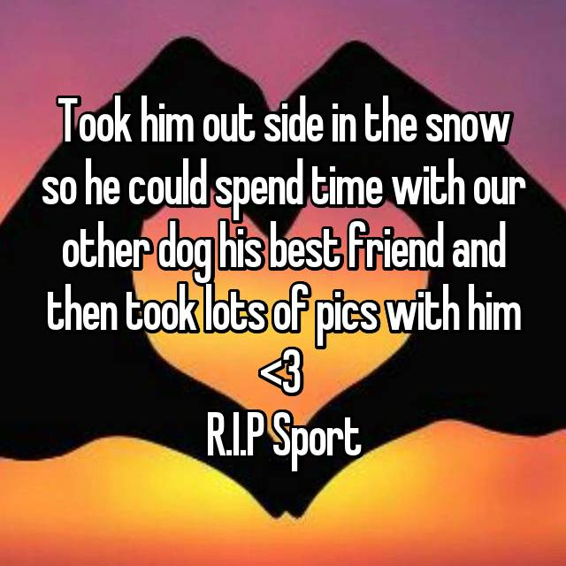 Took him out side in the snow so he could spend time with our other dog his best friend and then took lots of pics with him <\3  R.I.P Sport