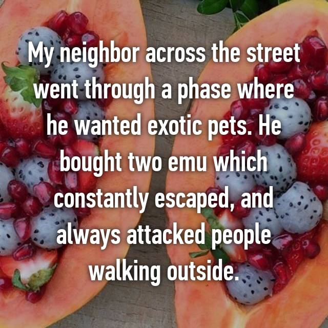 My neighbor across the street went through a phase where he wanted exotic pets. He bought two emu which constantly escaped, and always attacked people walking outside.