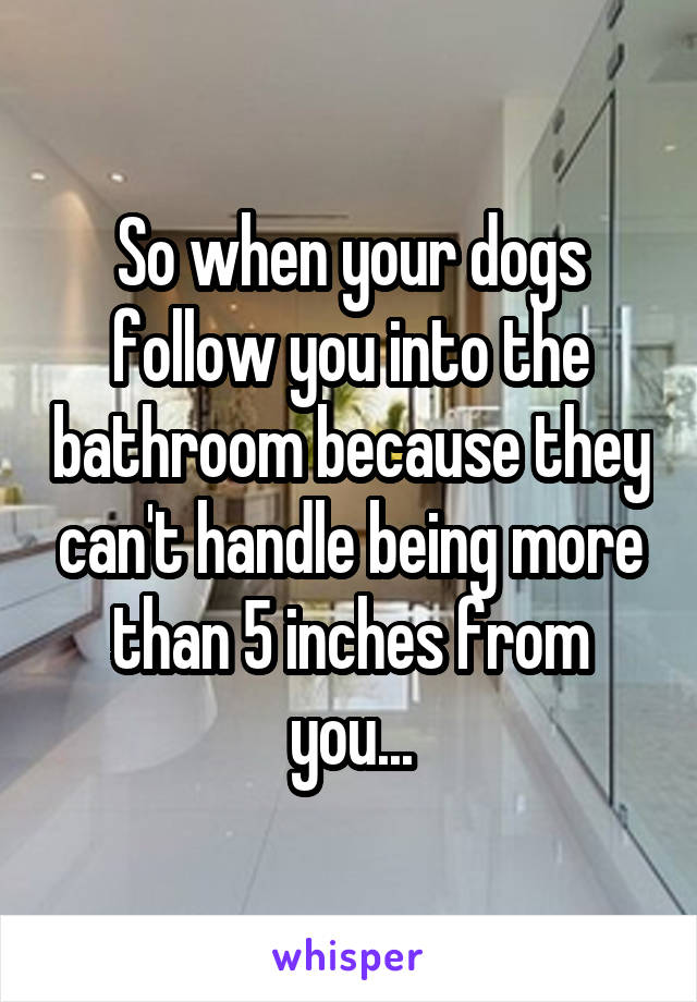 So When Your Dogs Follow You Into The Bathroom Because They Can T