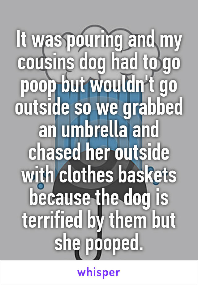 It was pouring and my cousins dog had to go poop but wouldn't go outside so we grabbed an umbrella and chased her outside with clothes baskets because the dog is terrified by them but she pooped.