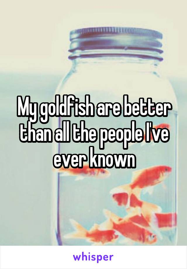 My goldfish are better than all the people I've ever known