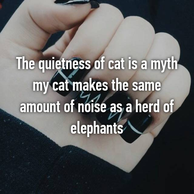 The quietness of cat is a myth my cat makes the same amount of noise as a herd of elephants