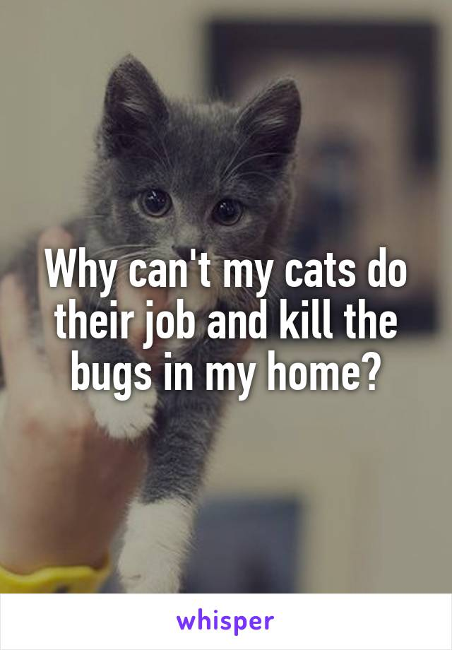 Why can't my cats do their job and kill the bugs in my home?