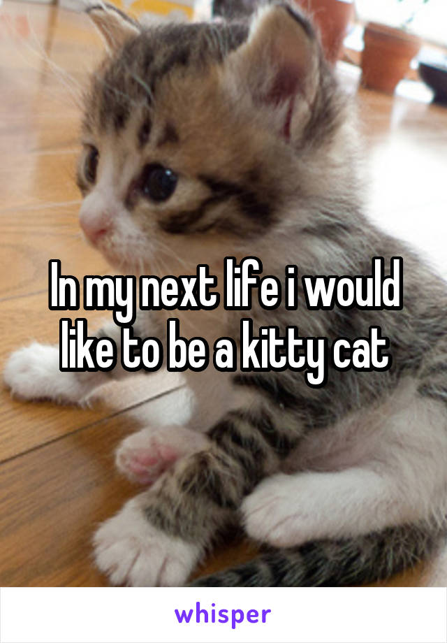In my next life i would like to be a kitty cat
