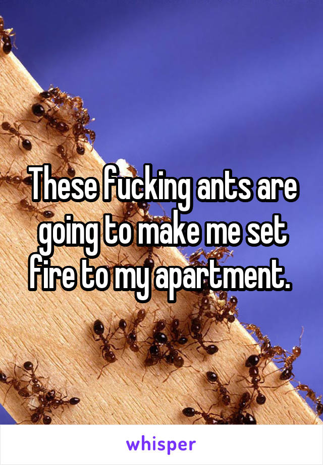These fucking ants are going to make me set fire to my apartment.