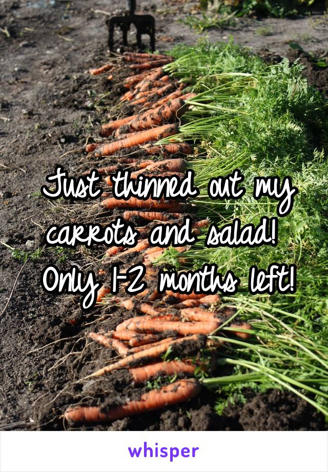 Just thinned out my carrots and salad!  Only 1-2 months left!
