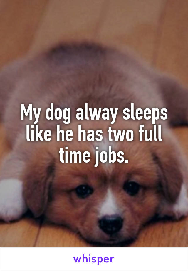 My dog alway sleeps like he has two full time jobs.
