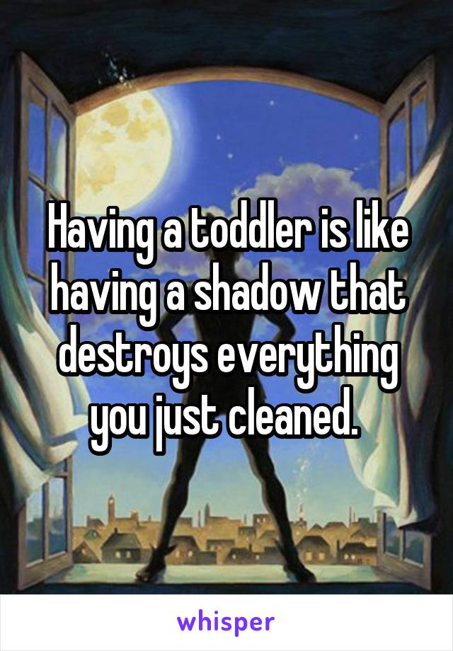 Having a toddler is like having a shadow that destroys everything you just cleaned.