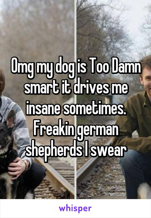 Omg my dog is Too Damn smart it drives me insane sometimes. Freakin german shepherds I swear