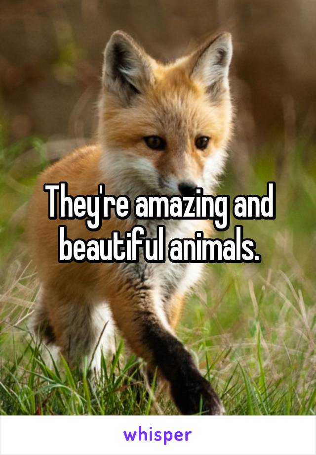 They're amazing and beautiful animals.