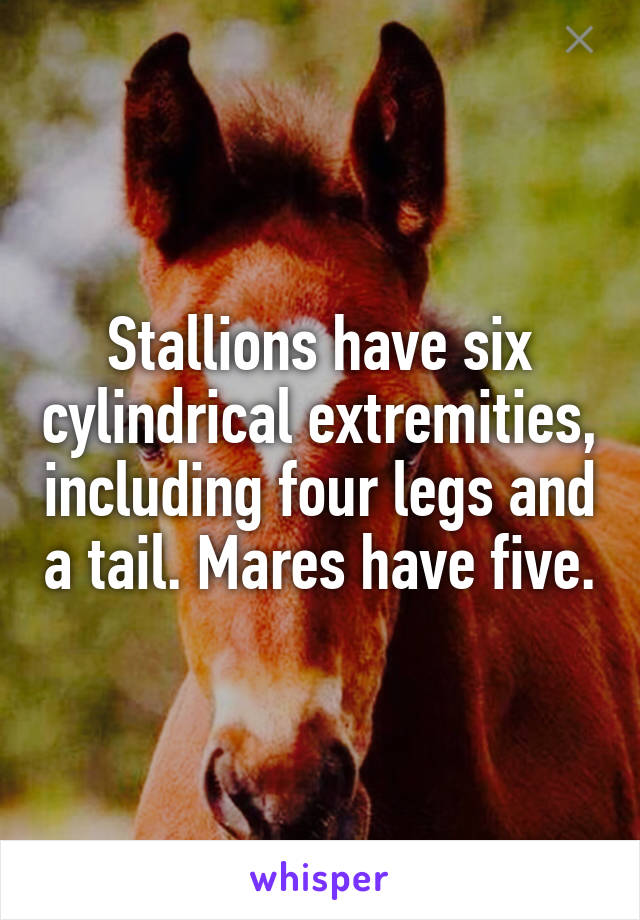 Stallions have six cylindrical extremities, including four legs and a tail. Mares have five.