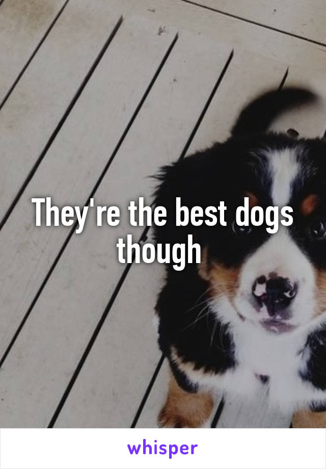 They're the best dogs though