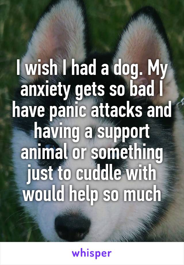 I wish I had a dog. My anxiety gets so bad I have panic attacks and having a support animal or something just to cuddle with would help so much