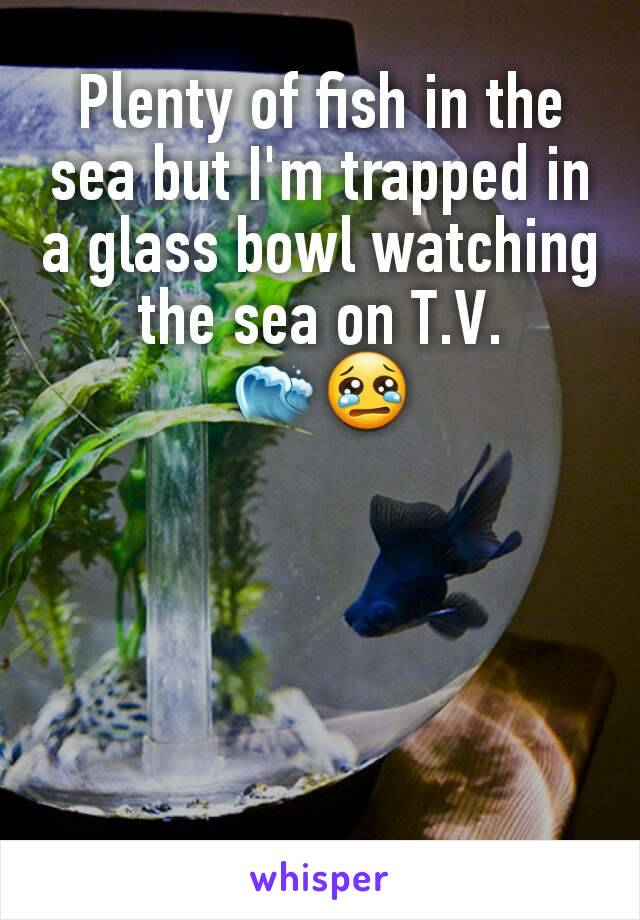 Plenty of fish in the sea but I'm trapped in a glass bowl watching the sea on T.V. 🌊😢