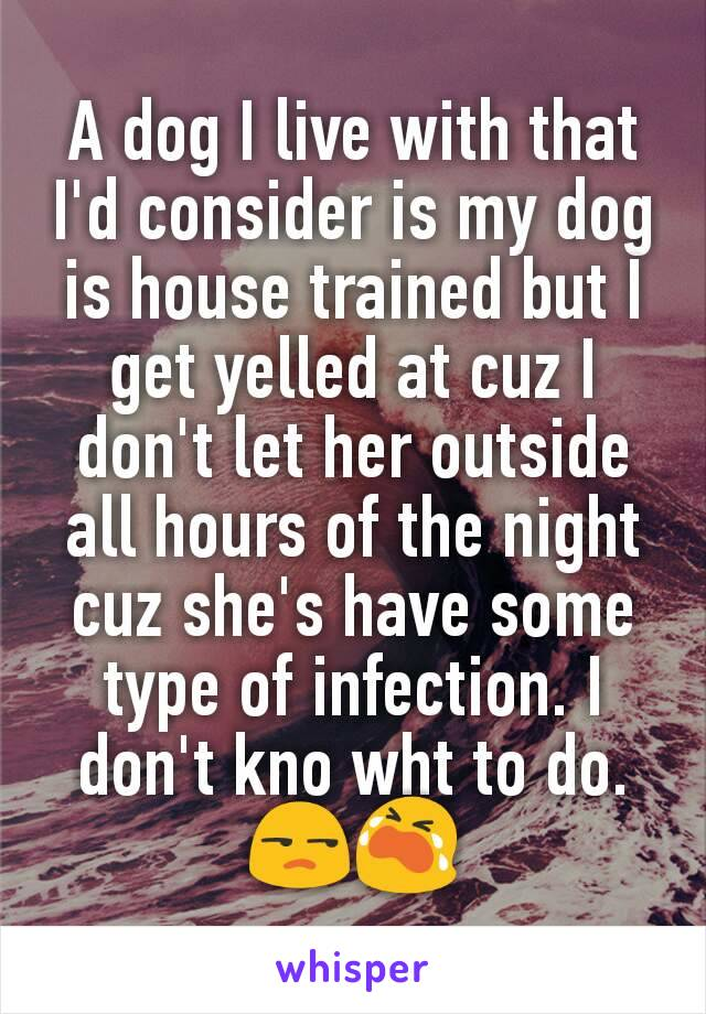 A dog I live with that I'd consider is my dog is house trained but I get yelled at cuz I don't let her outside all hours of the night cuz she's have some type of infection. I don't kno wht to do. 😒😭