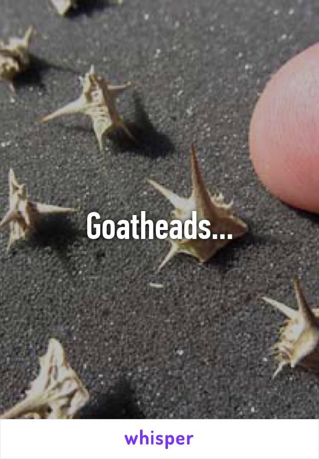 Goatheads...