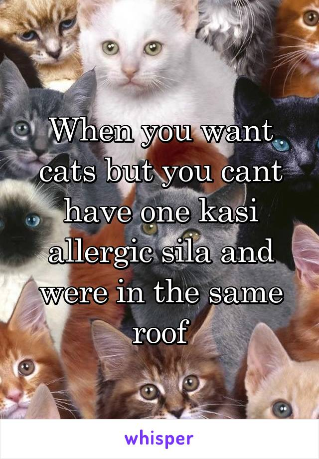 When you want cats but you cant have one kasi allergic sila and were in the same roof