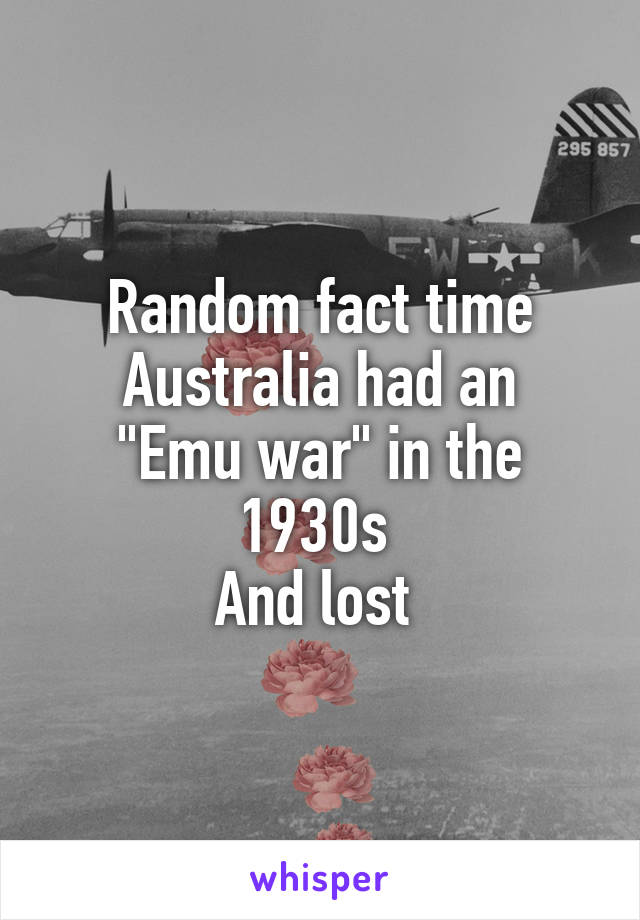 """Random fact time Australia had an """"Emu war"""" in the 1930s  And lost"""