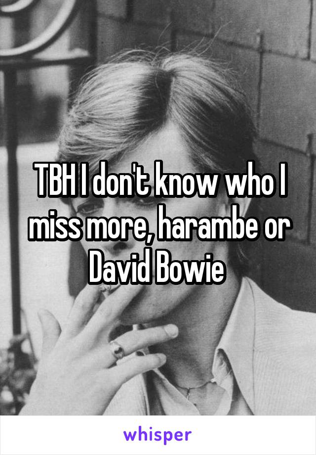 TBH I don't know who I miss more, harambe or David Bowie