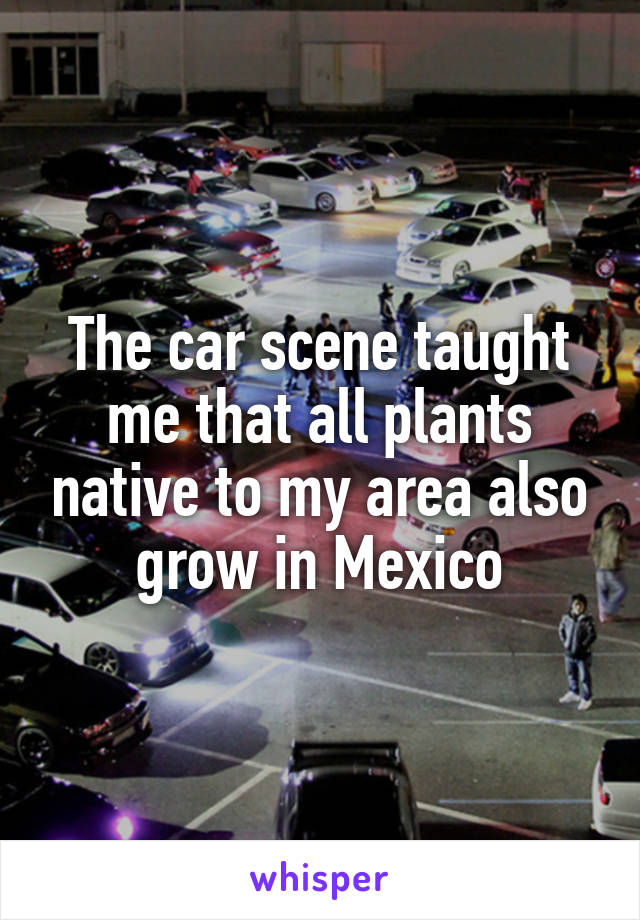 The car scene taught me that all plants native to my area also grow in Mexico