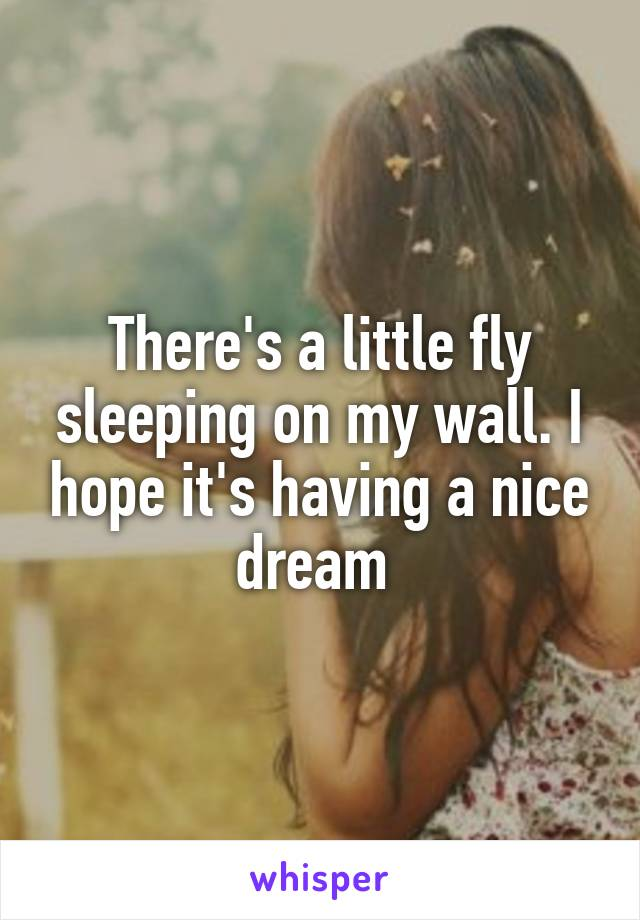 There's a little fly sleeping on my wall. I hope it's having a nice dream
