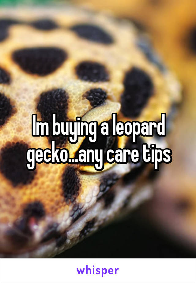 Im buying a leopard gecko...any care tips