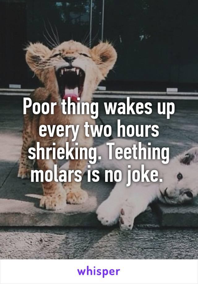 Poor thing wakes up every two hours shrieking. Teething molars is no joke.