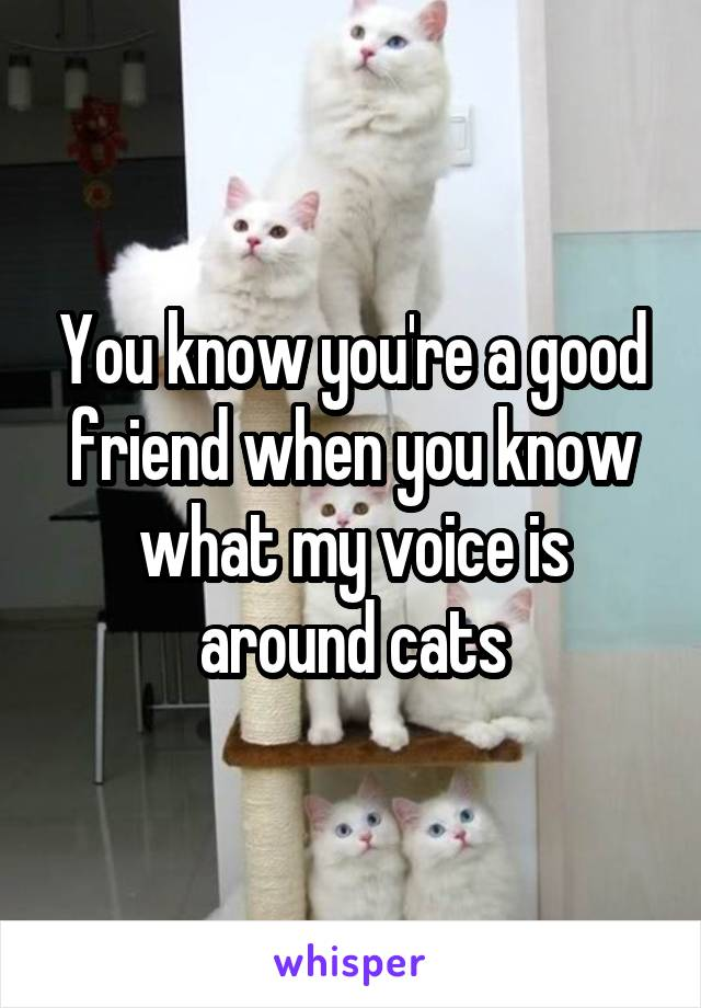 You know you're a good friend when you know what my voice is around cats