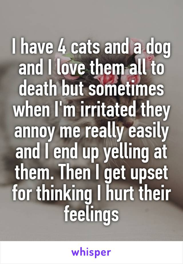 I have 4 cats and a dog and I love them all to death but sometimes when I'm irritated they annoy me really easily and I end up yelling at them. Then I get upset for thinking I hurt their feelings