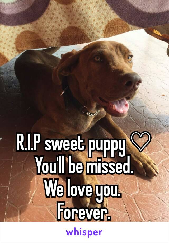 R.I.P sweet puppy ♡ You'll be missed. We love you.  Forever.
