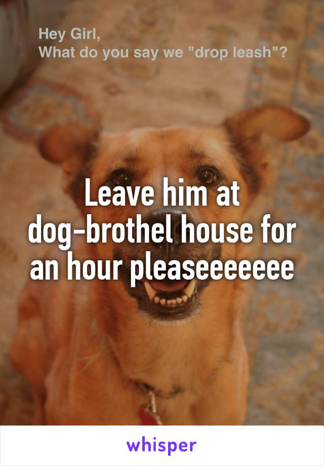 Leave him at dog-brothel house for an hour pleaseeeeeee