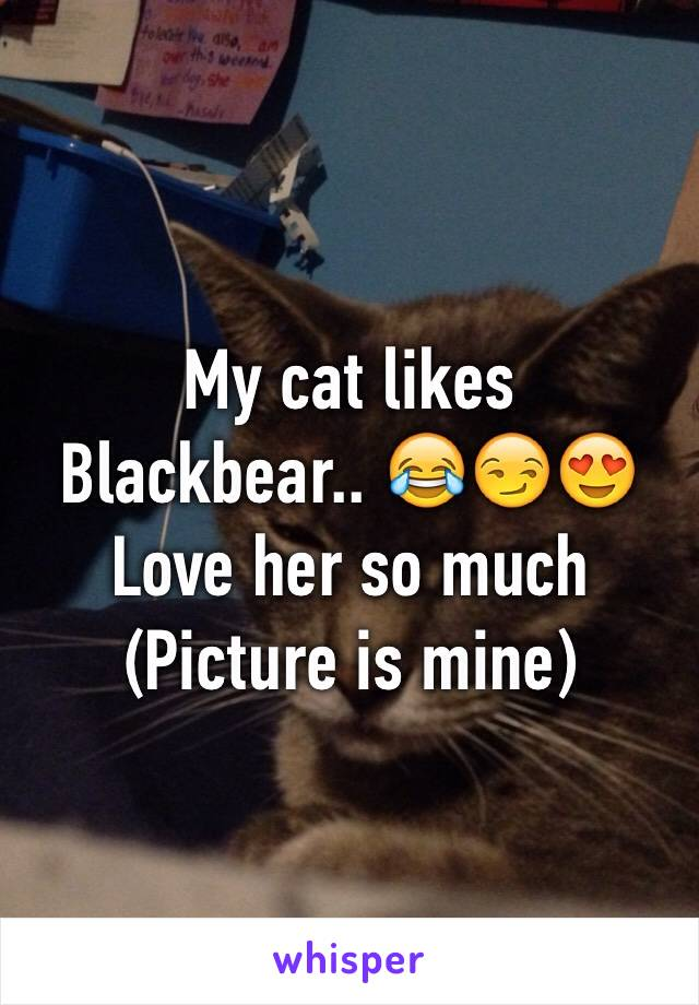My cat likes Blackbear.. 😂😏😍 Love her so much (Picture is mine)