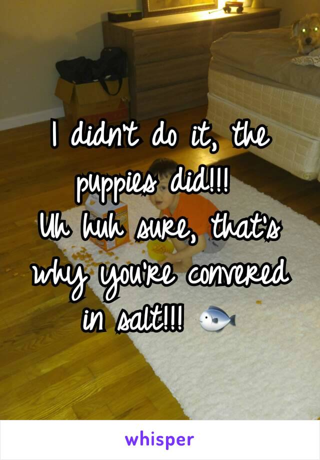 I didn't do it, the puppies did!!!  Uh huh sure, that's why you're convered in salt!!! 🐟