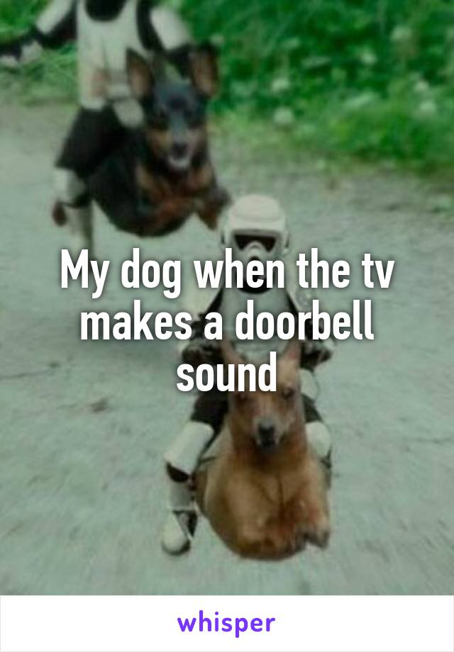 My dog when the tv makes a doorbell sound