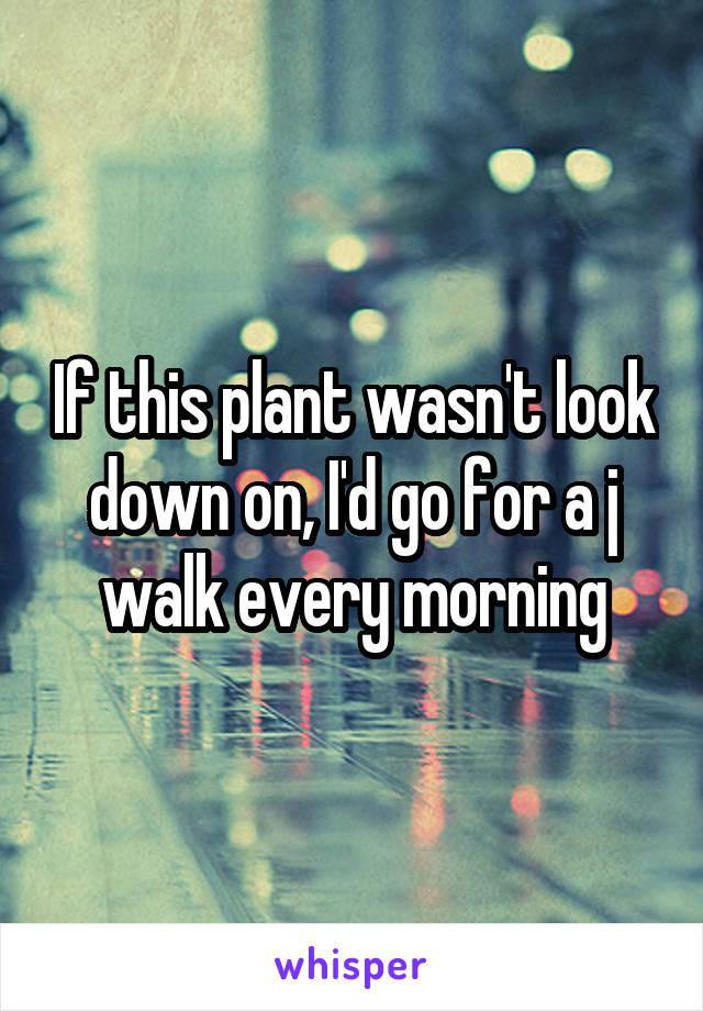 If this plant wasn't look down on, I'd go for a j walk every morning