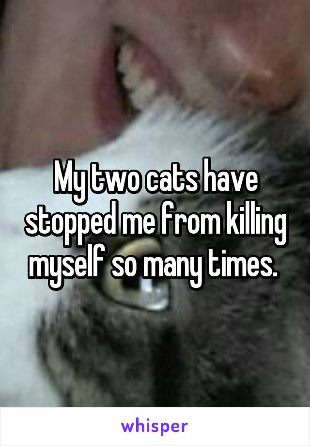My two cats have stopped me from killing myself so many times.